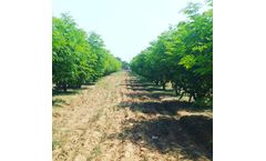 Moringa Farm Stay