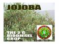 Setting of JOJOBA Farm from ground zero to harvesting stage