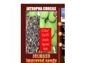 JCLMAX3 JATROPHA CLASS 1 HYV SEEDS