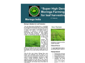 Super High Densitive Moringa Farming System for leaf harvesting introduced