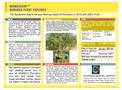 MOMAX3SAP™ MORINGA PLANT SAPLINGS