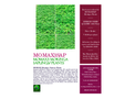 MOMAX3 Moringa Sapling/Plants Booking