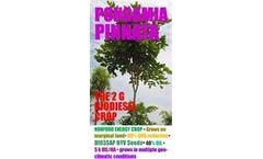 Pongamia Pinnata - Pongamia Pinnata Energy Project Services (DEP)
