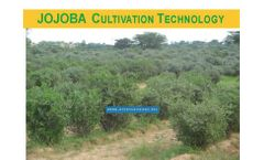 Jo03Rc - Jojoba Project Services