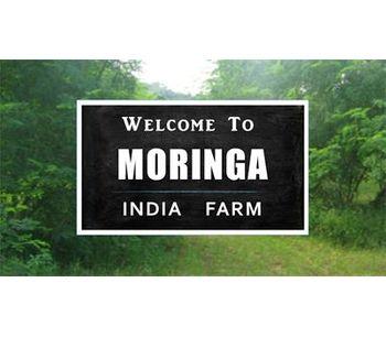 Moringa India - Moringa Farm Stay