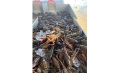 Crawfish farmer finds secret to doubling production and making more money