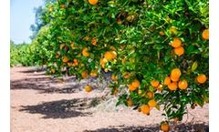 Mineral Oxychloride to rescue citrus market in Florida