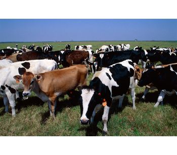 Technical Clay & Natural Solutions for animal feed & hygiene sector - Agriculture - Livestock