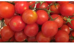 PESTICIDE AND ANTIBIOTICS RESIDUES IN FOOD - TOMATOES USED AS AN EXAMPLE