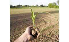 Levels of dioxins in soil and corn tissues after 30 years of biosolids application