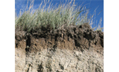 Soil carbon cycling and the global carbon balance