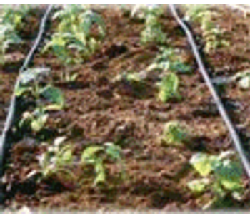 Aquacrop—the FAO crop model to simulate yield response to water