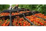 Pesticide and toxin screening for the food industry - Food and Beverage - Food