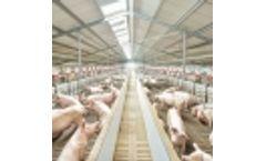 Livestock Barn Climate Computers