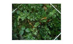 Specialist Vegetation Surveys