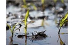 Crops and soil threatened by floods in the Midwest