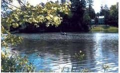 Bioremediation of Occom Pond at Dartmouth College Clears Water - Ecosystem Restoration