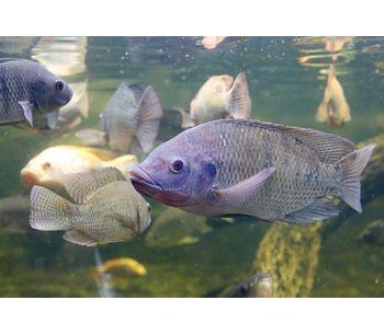 Aquaculture Solutions-3