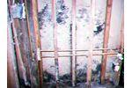 Mold Sampling Services