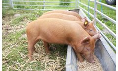Feed Pellets Application for Pig Breeding