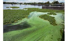 Toxic Blue-Green Algae Treatment