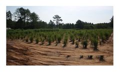 NEF - Energy Crop Breeding