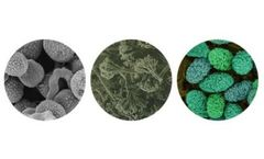 Mold Investigation Services