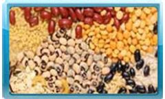 Food & Agro Products Testing Services