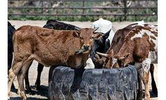 Livestock Policies Service