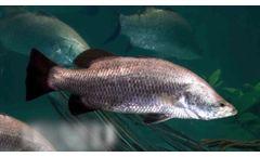 Inter Aqua Advance - Recirculation Aquaculture - Video