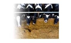 FEEDFIX - Detoxification Agent for Feed Additives