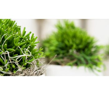 Green Interior Design Tips