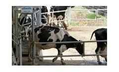 AfiSort - Cow Separation System