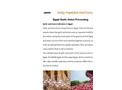 Egypt Garlic Onion Processing