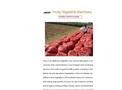 Pakistan Onions Processing