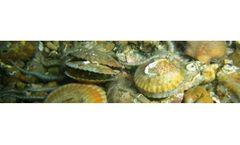 Subtidal Benthic Sampling