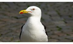 Seagull Deterrent Systems and Seagull Scarers Services