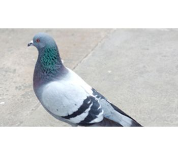 Pigeon Deterrents Solutions Services