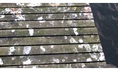 Bird Fouling and Mess Cleaning Services