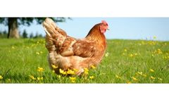 GLW Feeds - Poultry Feed