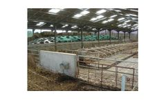 Model Junior Cubicles - Purpose-Built Calf Stall