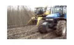 Cutting poplar in Spain for biomass Video