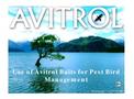 Avitrol Pest Bird Management Presentation pdf