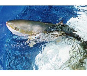 Nutra-Brood - Fish Feed
