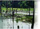 Wetlands Services
