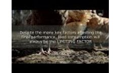 Aromas to Increase Feed Intake in a Commercial Layer Farm - Video