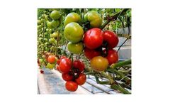 Puroxi - Water Treatment for Crops, Plants & Hydroponics