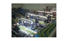 Brassica Handling Machine