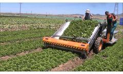 Ortomec 8500 - Harvesting of Head Lettuce - Video