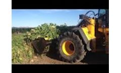 Rata Fodder Beet Bucket harvesting sugar beet on wheel loader